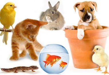 animaux domestiques