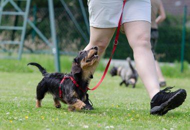 interagir avec son chien
